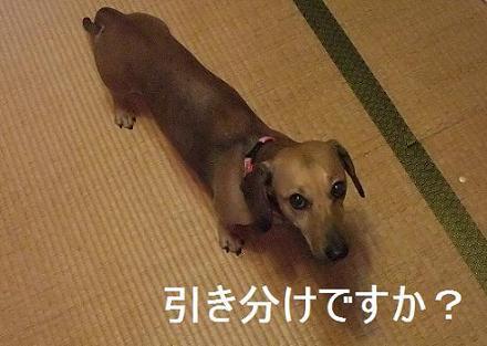 Hikiwake